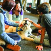 Students pet therapy dog in Gemmill Library