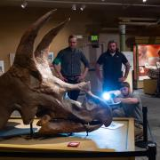 Nick Conklin (kneeling) of 3D Printing Colorado captures a scan of a Triceratops skull.