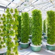 Aeroponic grow towers in the new CU Boulder greenhouse