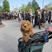 Even dogs came to watch graduates process from Norlin Quad to the main commencement ceremony. Photo by Glenn Asakawa.