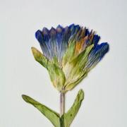 Floral sample at the herbarium