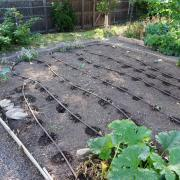 Garden plot near Regis University in Denver, one of more than a hundred study participant gardens