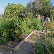 Professor Jill Litt and Program Coordinator Angel Villalobos look over a participant garden