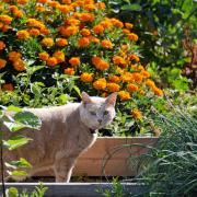 A cat prowls garden plots