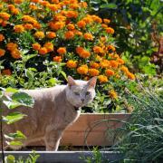 A cat prowls garden plots