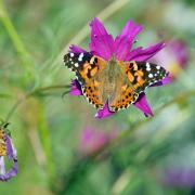 A butterfly lands on a flower at a community garden