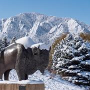 Ralphie sculpture by the CU Events Center after a snowstorm on Oct. 30, 2019. (Photo by Glenn Asakawa/University of Colorado)