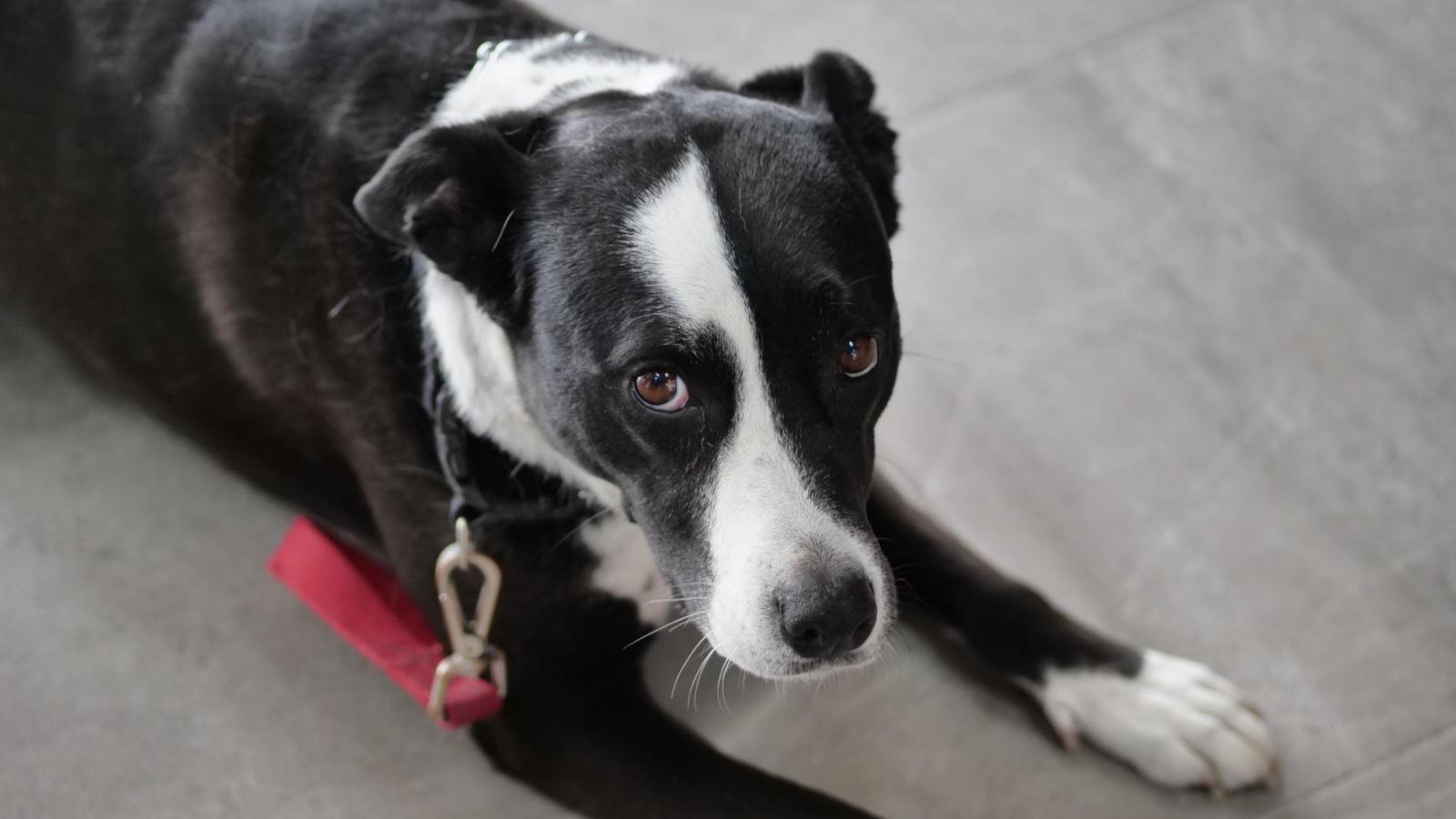 Dog pain story