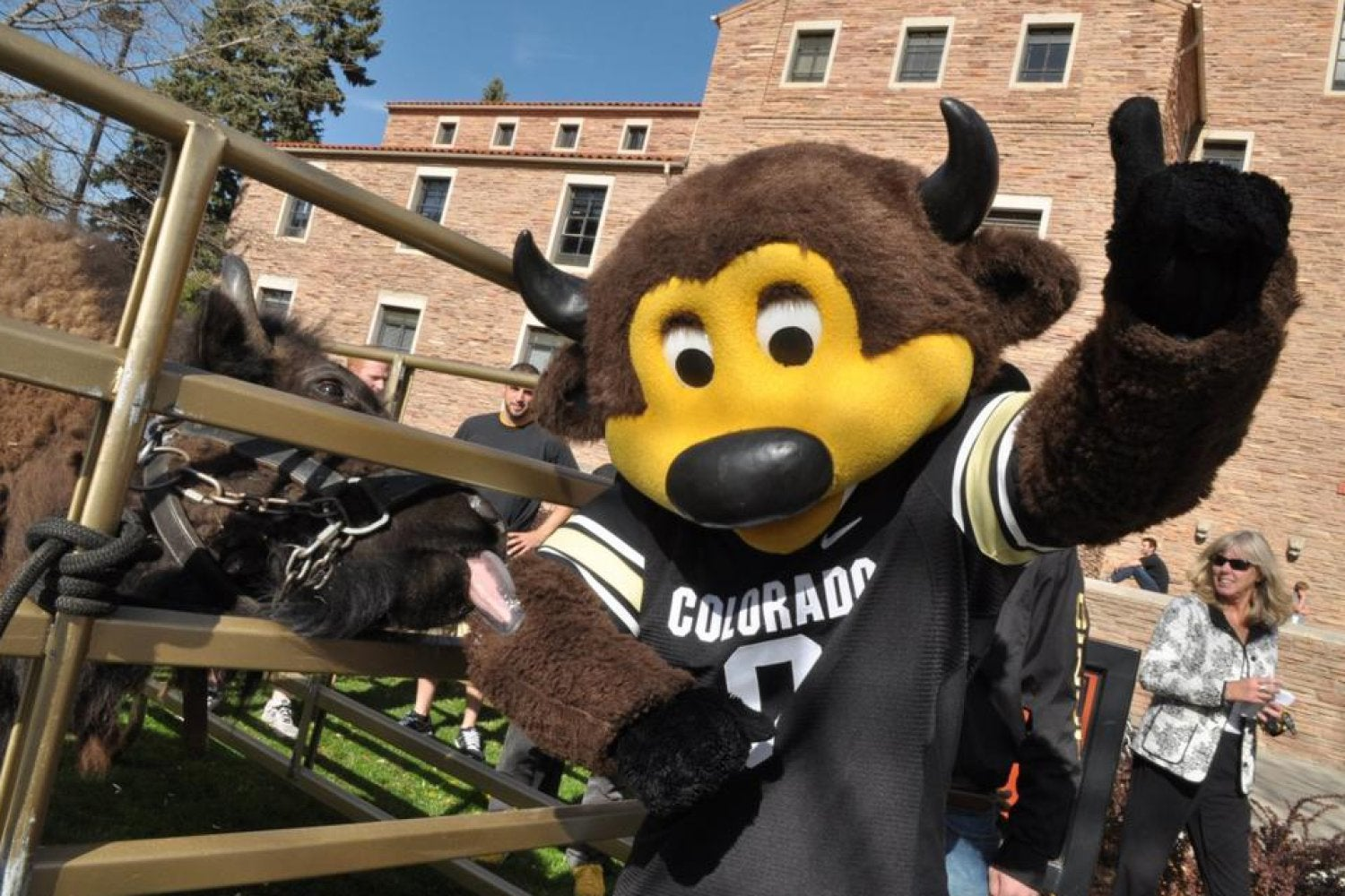 Chip and Ralphie, CU's mascots.