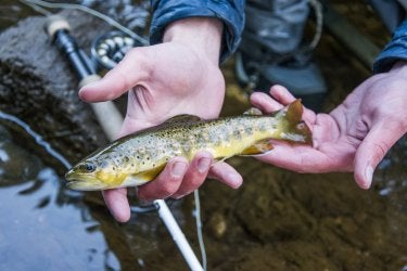 A photo of a person holding a small brown and yellow fish