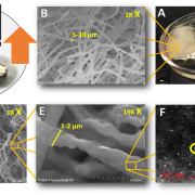 Growth of Fungal Electrochemical Materials