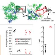 small molecule regulation of crispr-cas9